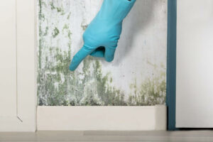 Moisissures sur un mur à cause de l'humidité
