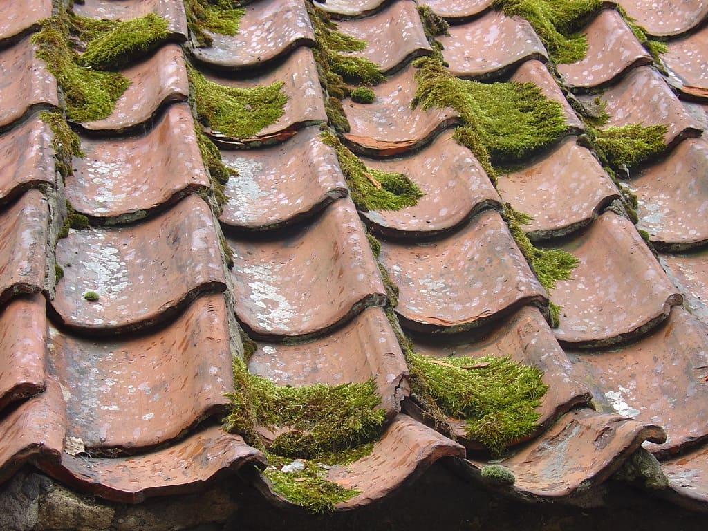 Apparition de mousse sur une toiture en tuile