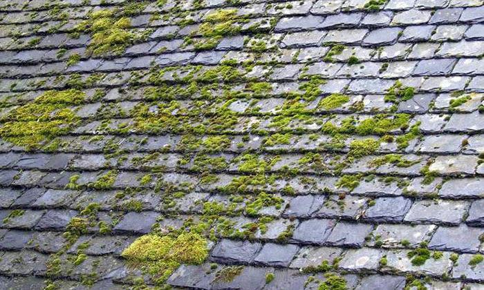 Apparition de mousse sur une toiture en ardoises